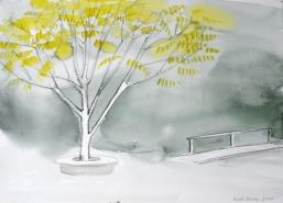 Manzuuria pähklipuu