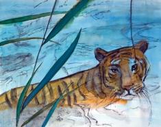 tiiger